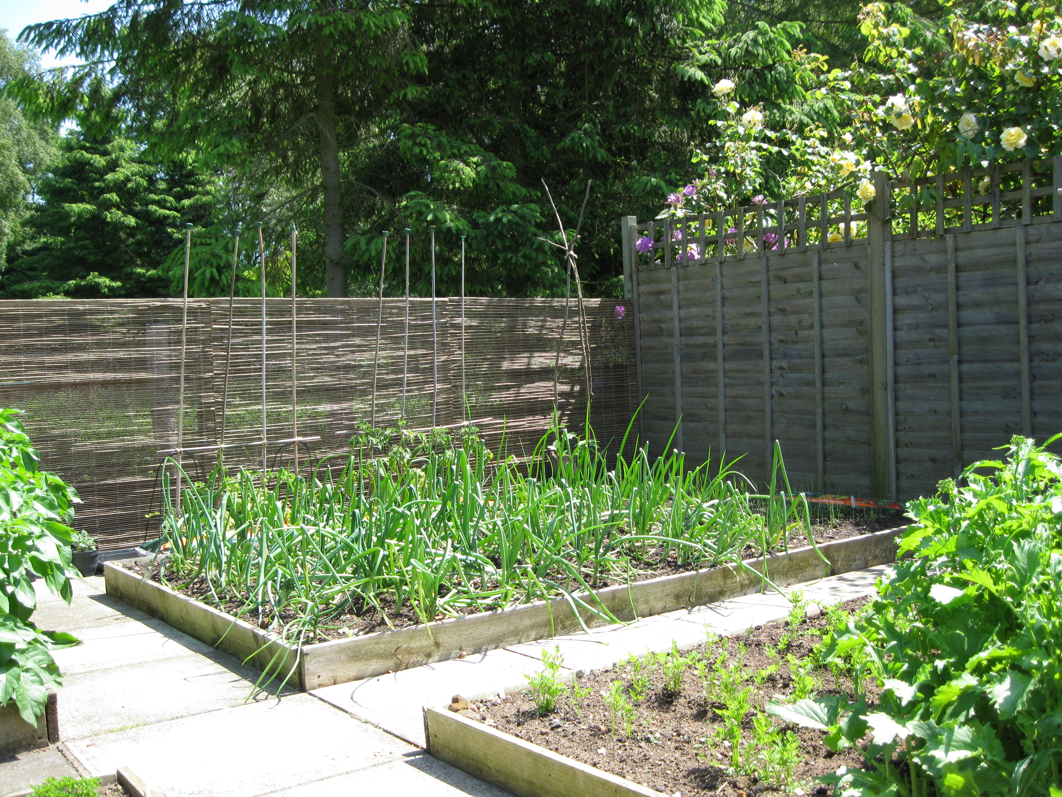 our organic vegetable garden and planning an easy crop rotation