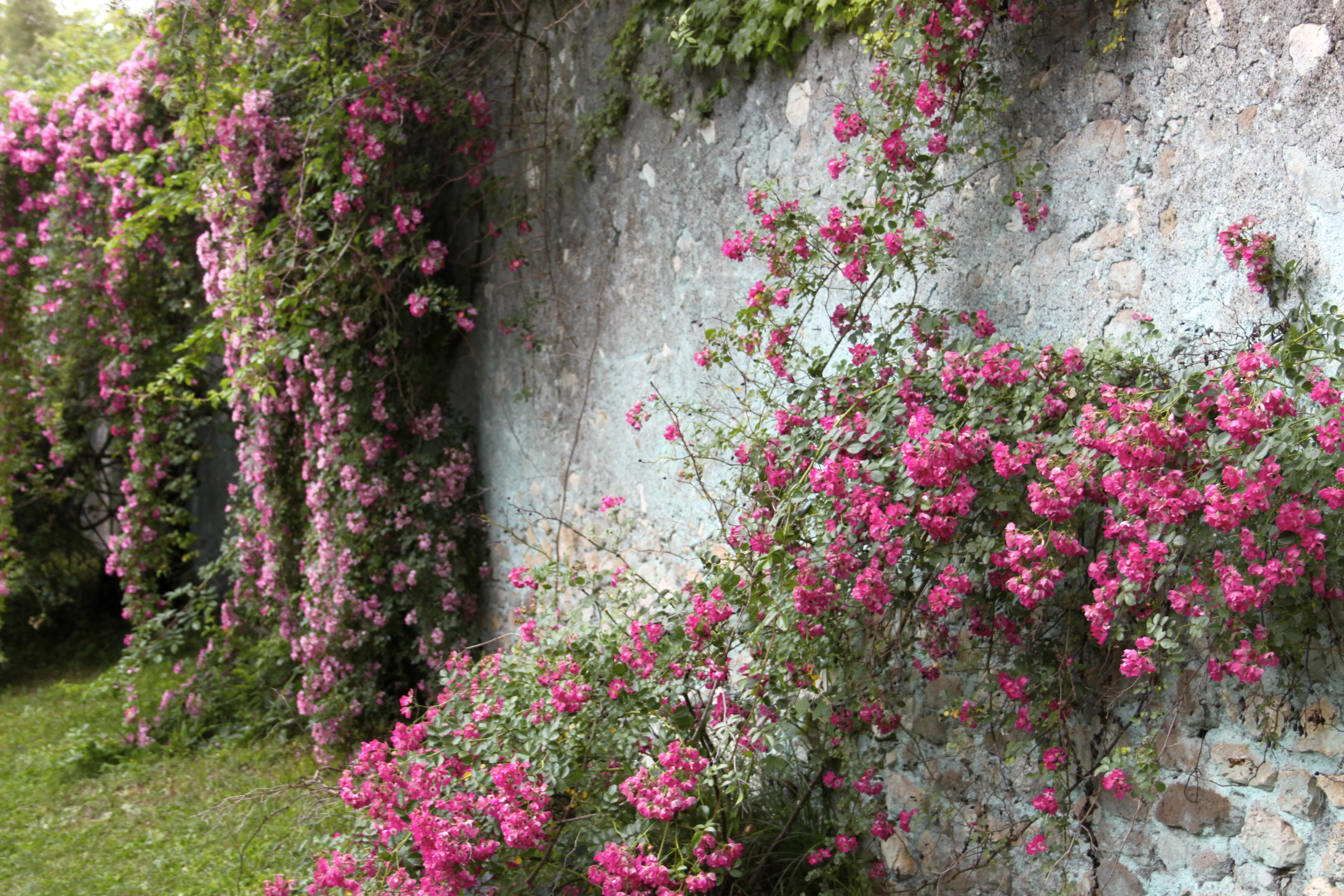 Garden of Ninfa near Sermoneta Italy