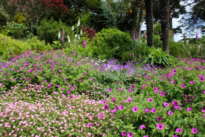 English perennial planting