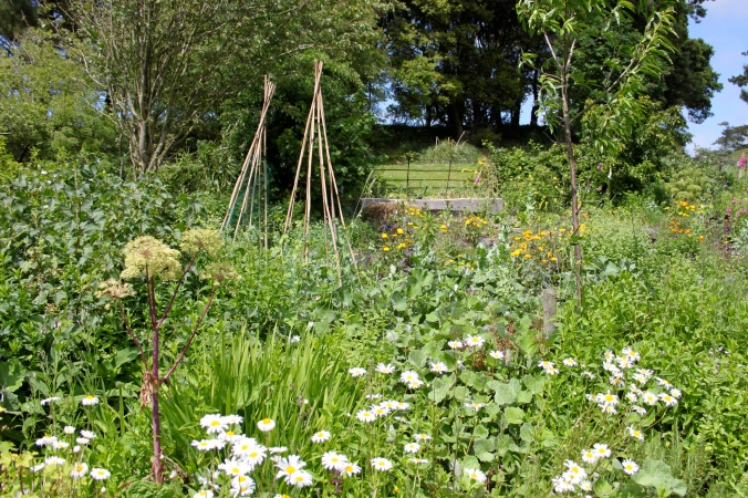 Permaculture planting