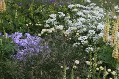 Phlox divaricata, Orlaya Grandiflora, Lupinus Cashmere Cream, Deschampsia flexuosa Laurent Perrier Gold and Best in show