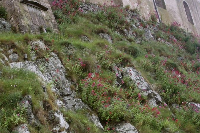 Crag planting under the castle