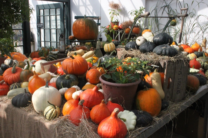 Pumpkins, squash and gourds, in the John   Greenhouse