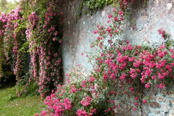Roses in the Garden of Ninfa