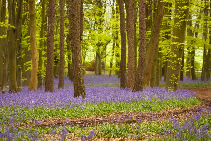 Walking through Bluebell Woods