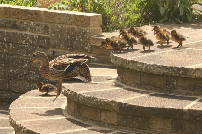 Leading her children down the patio steps