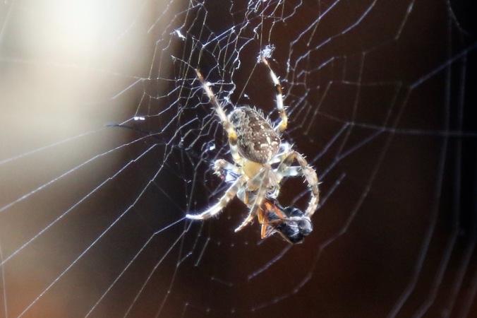 Potting shed Friend Garden Spider
