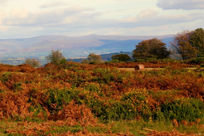 Bracken and Gorse on Brecon Beacons Mynydd IIItud common land