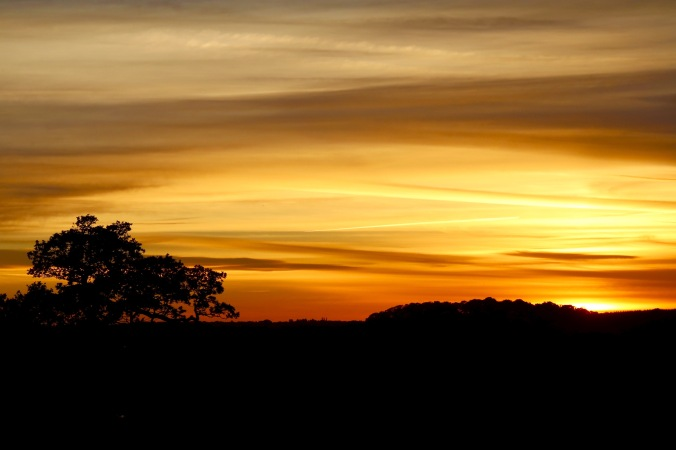 Autumn Sunset Woburn Deer Park