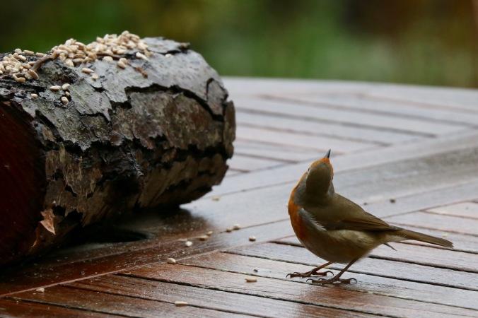 Alert Svelte Robin